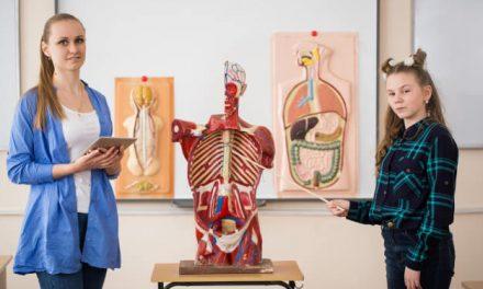 Conheça os diferentes tipos de modelos anatômicos