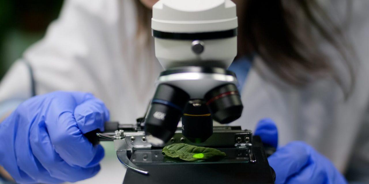 Onde comprar um microscópio? 7 motivos para você escolher a Loja Roster