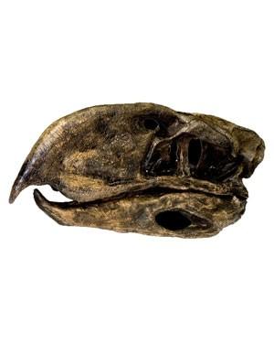 Crânio da Ave Terror (Paraphysornis) BR 11 Bios Réplicas
