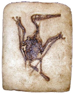 Réplica de Pterodactylus BR 42 Bios Réplicas