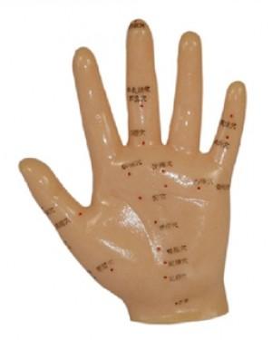 Mão Acupuntura COL 1509 Coleman