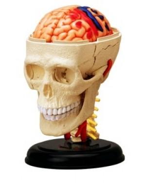 Crânio com Cérebro 39 Partes QC-26053