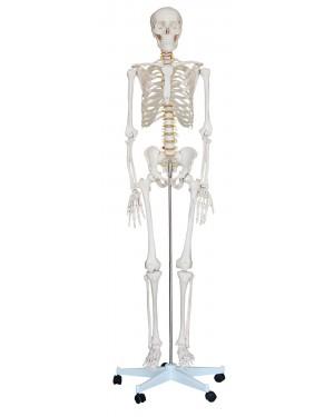 Esqueleto Humano 1,80m com rodas COL 1101 Coleman
