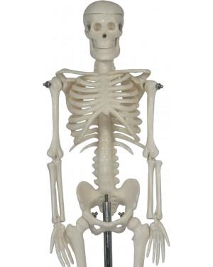 Esqueleto Humano Mini 42cm com Suporte COL 1103 Coleman