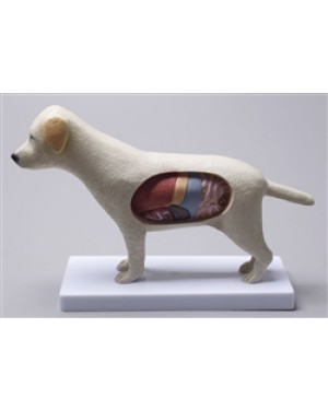Anatomia do Cachorro COL 3601 Coleman