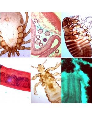 lamina preparada parasitologia