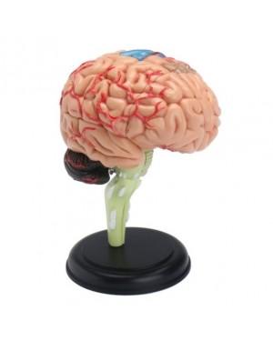 Cérebro com 32 Peças QC-26056