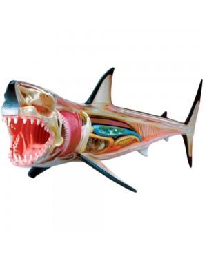 Anatomia do Tubarão Branco com 20 peças QC-26111