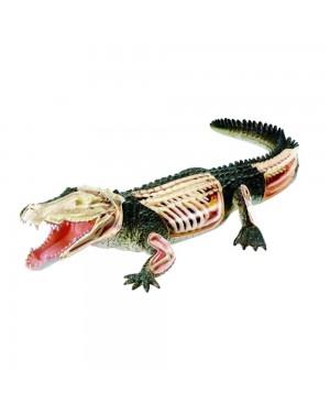 Anatomia do Crocodilo com 26 peças QC-26114