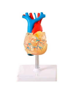 Coração Transparente 2 Partes com Sistema Condutor TGD-0322-T