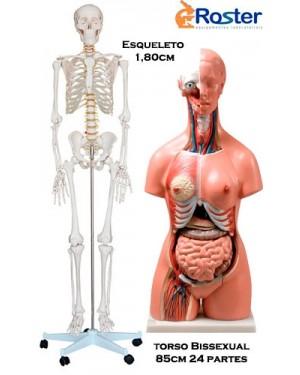 Esqueleto 1,70 + Torso Bissexual 85cm COL 1101+1204 Coleman