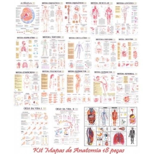 Kit Mapas de Anatomia Dobrado 18 peças KM-18