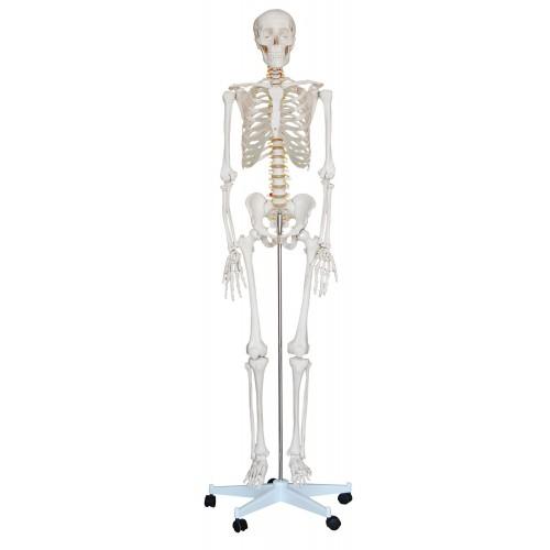 Esqueleto Humano 1,70m com rodas COL 1101 Coleman