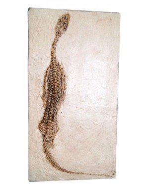 Fóssil de Réptil Marinho (Keichousaurus Hui) BR 28 Bios Réplicas