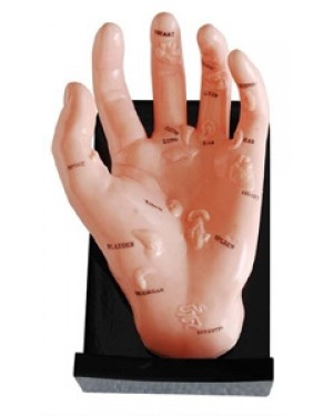 Mão Acupuntura com Órgãos COL 1511 Coleman