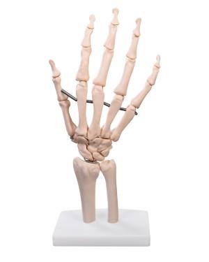 Articulação da Mão Sem Ligamentos COL 1114 Coleman