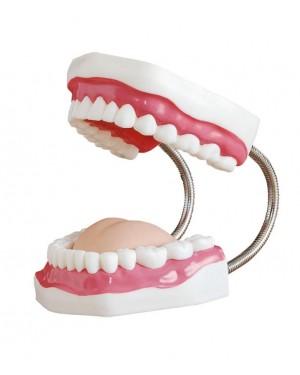 Arcada Dentária, Língua e Escova - Boca Grande COL 1403 Coleman