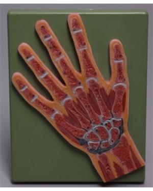Corte Mediano da Mão COL 2104 Coleman