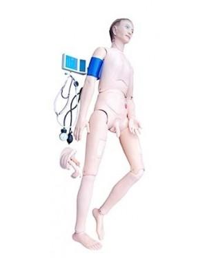 Manequim Bissexual Avançado com Órgãos Internos - Face Masculina COL 1401-A2 Coleman
