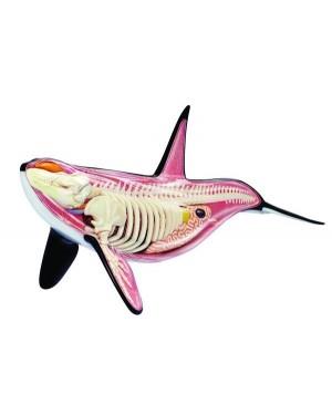 Anatomia da Orca com 16 Partes QC-26099