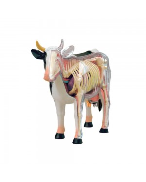 Anatomia da Vaca com 29 Partes QC-26100