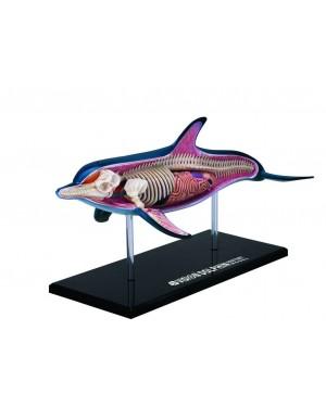 Anatomia do Golfinho com 18 Partes QC-26104
