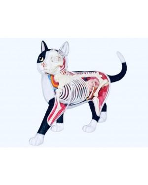 Anatomia do Gato em 28 partes QC-26005