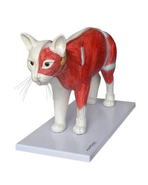 Anatomia do Gato TGD-0602-O